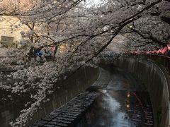目黒川から祐天寺 お花見がてらぶらり散歩