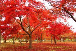 J14. 秋の倉敷&岡山