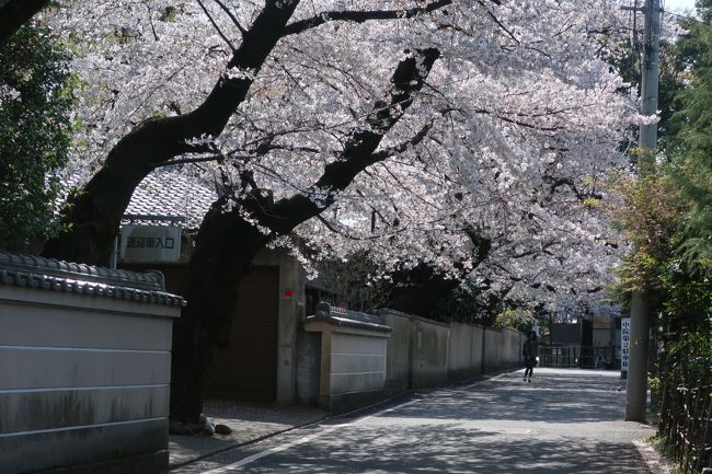 桜をみにいく2019<br />川越の桜を見に行った <br />そのあとは喜多院、川越氷川神社、神社裏の川沿いの桜、蔵の街並み みんな混んでいた<br />桜は満開 見頃<br />中院 これが一番素敵でした お庭もお手入れされていて素敵<br />うなぎもほあほあでとっても美味