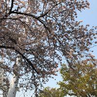東急で桜を見に行こう。