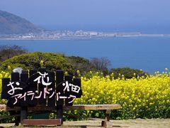 菜の花と桜を見に行く 能古島