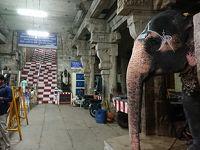 南インド一人旅 �・象さん、再び(ティルチラパッリ)
