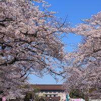 上野で花見&黒田記念館特別室鑑賞