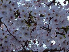 プログで知り合った方に、桜図鑑を差し上げに、中山寺まで行きました 中巻。