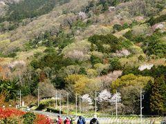 サクラと新緑を楽しみながら太平山を歩く