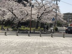 桜満開の徳川園