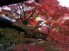 桜の季節ですが・・・季節はずれの紅葉旅行記です