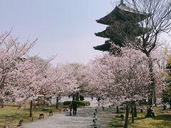 京都4月①~そうだ京都へ行こう!桜を見に!東寺から大好きな上賀茂神社、祇園白川へ