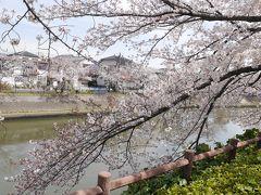 草加松原 綾瀬川の桜☆2019/04/06