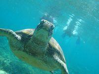 セブパシフィックで2年ぶりにフィリピンへ行く(本編② )アポ島でカメに会う