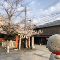 2019年京都の桜めぐり
