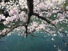 横浜さんぽ11☆フルーツなモーニングと野毛桜さんぽ