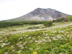 【森林限界散歩】8月下旬の旭岳トレッキング