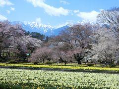 青春18きっぷで、甲府湯村温泉と神代桜一人旅 (2日目)山高神代桜ウォーキング
