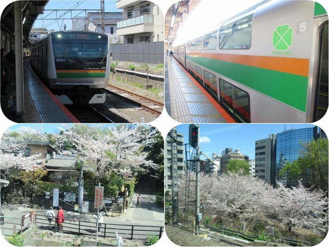 春の青春18きっぷの有効期限が翌日に迫った4月9日。<br />偶然が重なって湘南新宿ラインを使って宇都宮までのグリーン車旅に行くことになりました。<br /><br />沿線はどこも満開の桜。電車の中に居ながらにして桜を楽しむことができました。<br />もちろん旅の楽しみのグルメも。宇都宮餃子に駅弁にと。<br />そして宇都宮駅すぐの川沿いを歩き満開の枝垂桜も楽しんできました。<br /><br />予想以上に写真の撮れ高が十分すぎたので5編に分けて記事をお送りいたします。<br />第一編では逗子から湘南新宿ラインに乗って新宿まで。<br />鎌倉円覚寺前の桜にはじまって都心に咲く桜まで楽しい車窓でした。<br /><br />