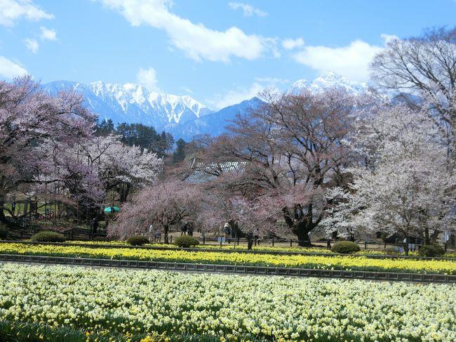 青春18きっぷで一人旅。甲府湯村温泉に泊まることと、山高神代桜を見ることが目的。2日間とも天気が良く、桜もほぼ満開ででとてもきれいでした。<br /><br />(1日目)舞鶴城公園、武田神社、甲府湯村温泉<br />(2日目)山高神代桜ウォーキング<br /><br />参考:大人の遠足「四季の花あるき関東周辺」