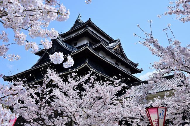 2019年、さくらの名所を巡る旅・第1弾!<br /><br />4月に入り、続々と桜の開花の便りが届きだし、ついに春本番。<br />これと機を同じくして、昨今の働き方改革の影響か、4月にまとめて有給休暇を消化するよう指導?が入り、このタイミングでまとまった休みを確保。<br /><br />そこで、さくらの名所を巡る旅第一弾として、3泊4日の日程で中国・近畿地方の気になる桜スポットを訪れてみることに。<br />その最初の街は、江戸時代に隠岐・出雲国24万石を治めた松江藩の城下町・松江。<br />全国で5城しかない国宝に指定された現存天守が残り、かつ桜の名所でもあるという「松江城」は、1年で1番華やいだ雰囲気になっているはず♪<br />例年、満開になるのは4月上旬とのことですが、さてどうでしょうか。。。<br /><br /><br />〔2019さくらの名所を巡る旅 アウトライン〕<br />●Part.1(1日目①):松江城/松江城山公園(日本100名城/さくら名所100選)<br /> 【この旅行記】<br />●Part.2(1日目②):松江城下町(堀川めぐり)<br /> https://4travel.jp/travelogue/11480502<br />●Part.3(2日目①):津山城/鶴山公園(日本100名城/さくら名所100選)<br /> https://4travel.jp/travelogue/11484252<br />●Part.4(2日目②):中山神社(美作国一之宮)/城東(重伝建地区)<br /> https://4travel.jp/travelogue/11491168<br />●Part.5(3日目①):姫路城①(日本100名城/さくら名所100選)<br /> https://4travel.jp/travelogue/11593194<br />●Part.6(3日目②):姫路城②(日本100名城/さくら名所100選)<br /> https://4travel.jp/travelogue/11601496<br />●Part.7(4日目①):大和郡山城(続日本100名城/さくら名所100選)<br /> https://4travel.jp/travelogue/11613989<br />●Part.8(4日目②):奈良公園(さくら名所100選)<br /> https://4travel.jp/travelogue/11615907<br />●Part.9(4日目③):大神神社(大和国一之宮)<br /> https://4travel.jp/travelogue/11618583<br /><br />〔日本100名城登城記〕<br />●水戸城(常陸国)<br /> https://4travel.jp/travelogue/11472788<br />●上田城(信濃国)<br /> https://4travel.jp/travelogue/11516270<br />●高知城(土佐国)<br /> https://4travel.jp/travelogue/11567369