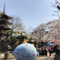2019年 東京の桜めぐり