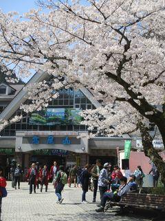 東京・八王子<高尾山> 桜花爛漫・日帰りトレッキング
