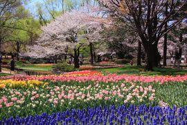 国営昭和記念公園:FLOWER FESTIVAL 2019~満開の桜とチューリップの競演&普済寺、諏訪神社