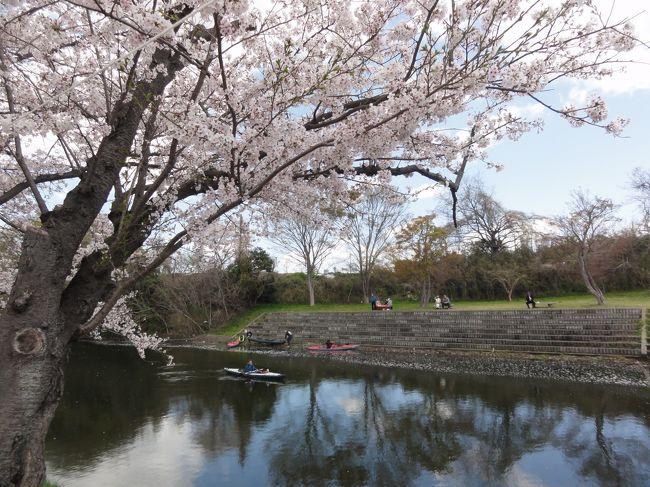 TVで龍ケ崎般若院の枝垂れ桜を見て、牛久周辺の桜も見たいとあちこち行ってみました。牛久シャトー、牛久栄西第二公園、二池、牛久中央公民館近くの運動広場(多目的広場)周辺、龍ケ崎市の般若院、つくば市の農林さくら通り、つくばみらい市の福岡堰と桜の見どころはあちこちにありました。<br />花見とランチや谷田部の郷土資料館、海苔屋さんでの買い物と充実してました。