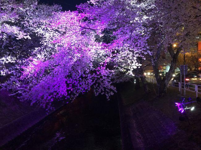 2019年の五条川 <br /><br />今年も仕事の帰りや休みの夜に桜を楽しみました<br /><br />iPhoneカメラで撮った五条川の桜夜景です