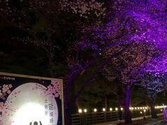 韓国 ひとり旅(5)夜桜