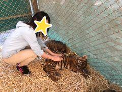 アルゼンチン編②あの猛獣と触れ合えるルハン動物園へ!