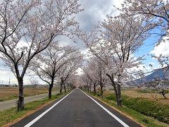 お花見ドライブ &  りんりんロードでサイクリング 2019年