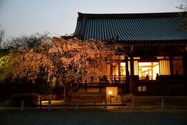 ひとりお花見部 妙満寺のライトアップと 嵐電桜のトンネル夜桜電車の 一日め後半篇
