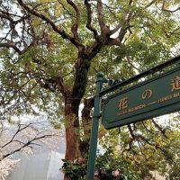 初めての宝塚!~宝塚、花のみちは桜が満開で美しく、宝塚も美しかった~