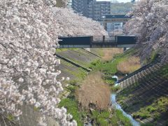 東京散歩 多摩センター駅から乞田川の桜並木を歩きました。