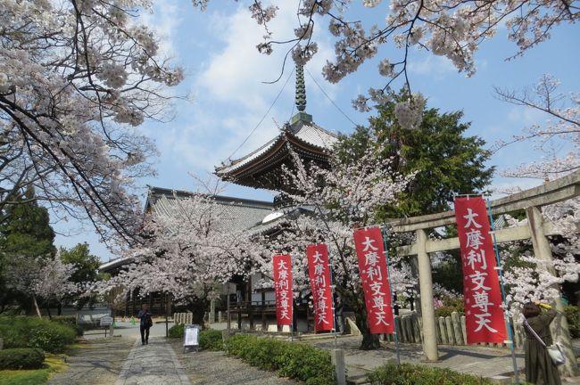 初めて桜満開の京都に行きました。混んでいることを見越して、南禅寺や嵐山は避けます。<br />小さな通好みの寺院が多い、西陣中心の京都旅。前半になります。