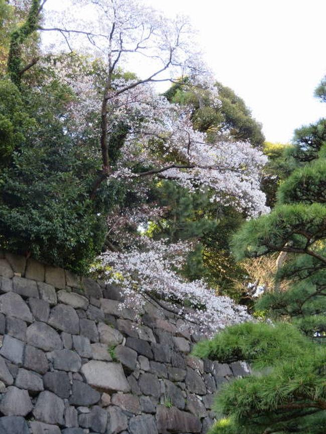 天皇陛下の退位を前に、平成最後の皇居の通り抜けに行ってきました。皇居内の桜は満開で、都心のオアシスはたくさんの人でにぎわっていました。