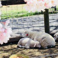 桜もふもふ
