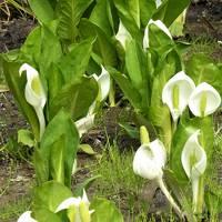 大阪南部の春、4月の花々・・♪(花の文化園・和泉リサイクル公園・泉佐野でランチ)