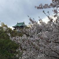 大阪多国籍グルメ� 大阪城の桜と桃園 パキスタン料理&猫カフェ(=^ェ^=)