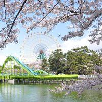 華蔵寺公園でお花見