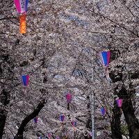 東京桜旅 ~王子から雑司ヶ谷へ~