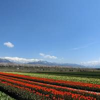 4歳娘と週末富山★絶景!春のカルテット