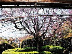 嵐山・嵯峨野・太秦・桂の旅行記