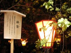 造幣局の桜の通り抜け2019 夜桜