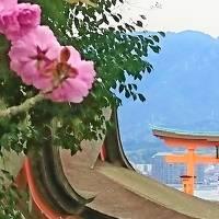 2019年4月旅 安芸の宮島&広島ぶちうまいけぇ~