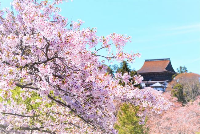 あおによし奈良県民の会社の先輩Nさんに<br />「JALの機内誌に、金峯山寺の<br />春のご開帳が載ってました~♪」と<br />お伝えしたら「では、行きましょう」<br />ということになり、春の桜の吉野山へ。<br />大阪造幣局「桜の通り抜け」にも行けた<br />週末☆桜ざんまいの旅行記.☆*<br />宜しかったらご覧ください。<br /><br />4/12<br />・NH:新千歳20:25→関空22:20<br />・東横イン大阪あべの泊<br />4/13<br />・青のシンフォニーで吉野へ<br />・奥千本→上千本→金峯山寺<br />・カンデオホテル橿原泊<br />4/14<br />・橿原神宮<br />・大阪造幣局<br />・JL:伊丹空港19:10→新千歳20:40<br /><br />・写真は吉水神社前から金峯山寺<br />