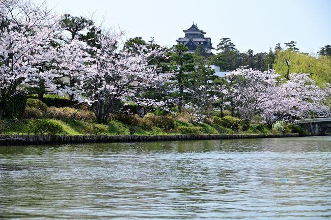 2019年、さくらの名所を巡る旅・第1弾!<br />今回は3泊4日の日程で、中国・近畿地方の気になる桜スポットを訪ねてみることとし、最初に訪れたのは、江戸時代に隠岐・出雲国24万石を治めた松江藩の城下町・松江。<br /><br />まずは国宝に指定された「松江城」の天守へ登閣(Part.1)。<br />引き続き、桜が彩る城跡内のスポットやお城北側の「塩見縄手」を散策し、さらに、松江城を囲むように残るお堀を小船で巡る「ぐるっと堀川めぐり」の遊覧船に乗船♪<br />松江城と並びこちらも松江観光の定番ですが、さて桜の季節に眺める景色はさてどんなものでしょうか。。。<br /><br />【 旅のアウトライン 】<br />●日 程:2019年4月6日~9日(3泊4日)<br />●エリア:島根県松江市 → 岡山県津山市 → XXX<br />●目 的:桜(日本さくら名所100選)、日本100名城 ほか<br />●旅行記の構成<br />・Part.1(1日目①): 松江城/松江城山公園<br />            https://4travel.jp/travelogue/11478799<br />・Part.2(1日目②): 松江城/松江城山公園~松江城下町(堀川めぐり)<br />           【この旅行記】<br />            <津山泊><br />・Part.3(2日目①): 津山城/鶴山公園<br />            https://4travel.jp/travelogue/11484252<br />・Part.4(2日目②): 津山城/鶴山公園~津山城下町<br /><br />●メインスポット:松江堀川めぐり<br />・運行時間:9:00~16:00/17:00/18:00(季節により変動あり)<br />      15~20分間隔で運行。<br />・乗船場所:松江堀川ふれあい広場/大手前広場/カラコロ広場<br />・所要時間:一周約50分程度(2ヵ所で途中下船可)<br />・料  金:大人1,500円(各種割引あり)<br />・参考HP:ぐるっと松江堀川めぐりHP<br />      https://www.matsue-horikawameguri.jp/<br />・雑  感:<br /> 松江城を囲むように造られた堀は、全国的にも珍しく今も築城時の姿を残しており、ここを小さな遊覧船がゆっくりと進んでいきます。川面からは、城下町松江の昔ながらの風景はもちろん、お堀端の緑豊かな自然や県都の面を持つ市街地の様子を、普段とは異なった視点から楽しめます。<br /> その中でも1番の見どころは、やはりお堀北東から眺める松江城天守。桜の季節には天守と桜の美しい光景を眺めることができます。<br /> 料金は大人1,500円とちと高めな気がしますが、3ヵ所にある乗船場で1日乗り降り自由なのはいいアイディア(50分では飽きる人もいるかも)で、工夫すれば効率的な移動手段にもなり得るかと。また、桜の季節の週末でしたが、随時発着しているのか、思ってたよりも混雑していませんでした。