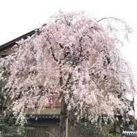春を満喫したい!金沢に寄ってきました!!