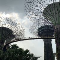 JGC修行②/おひとりさまシンガポール3日目・前編~未来植物園ガーデンズ・バイ・ザ・ベイで考えた!