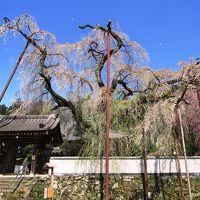 春の秩父観音めぐりと清雲寺へ