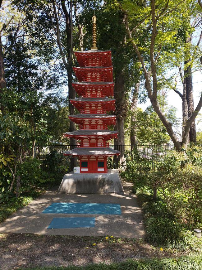 国分寺の南部を見物しました。