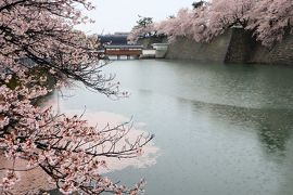 北陸8名城のさくら(5)・・霞ヶ城公園(越前丸岡城)と福井城址を訪ねます。
